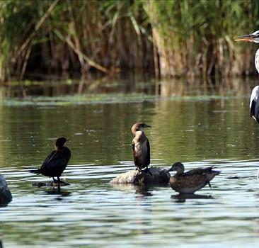 'Doğu'nun kuş cenneti'nde göç hazırlığı başladı