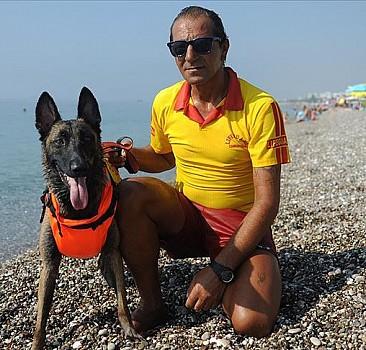 Cankurtaran köpeği 'Fox' Konyaaltı sahilinde göreve başladı