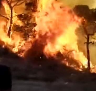 Heybeliada'daki yangına müdahale ediliyor