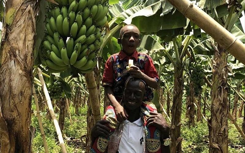 TİKA'dan Batı Afrika ülkesi Gine'deki muz üretimine destek