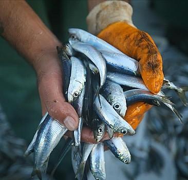 Marmara Denizi'nde hamsi, istavrit ve sardalya için dökme avcılık yasaklandı