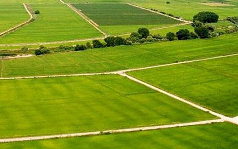 Balıkesir Ayvalık'ta icradan satılık 27 bin 710 m² fıstıklık tarım arazisi