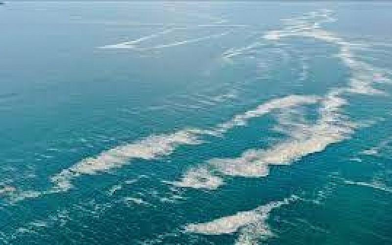 Marmara Denizi'nde Müsilaj Problemi ve Çözüm Önerileri Çalıştayı