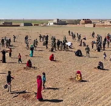Mehmetçik, Tel Abyad'da kullanılmayan arazileri ağaçlandırıyor