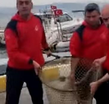 Yaralı deniz kaplumbağasının silahla vurulduğu ortaya çıktı