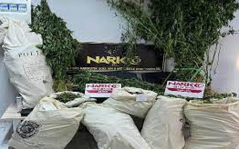 İzmir'de 363 kök Hint keneviri ile 9 kilo 400 gram esrar ele geçirildi