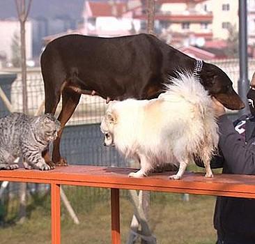 Ankara'da evcil hayvanlar oyun parkında özgürce dolaşıyor