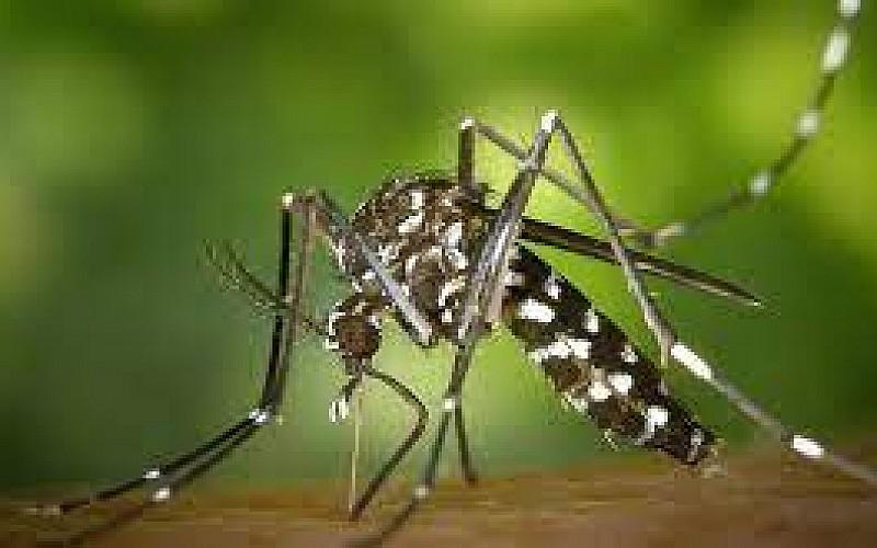 İstanbul'da vatandaşların sivrisinek rahatsızlığı devam ediyor