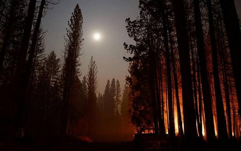 Dünyanın en büyük ağaçları tehdit altında