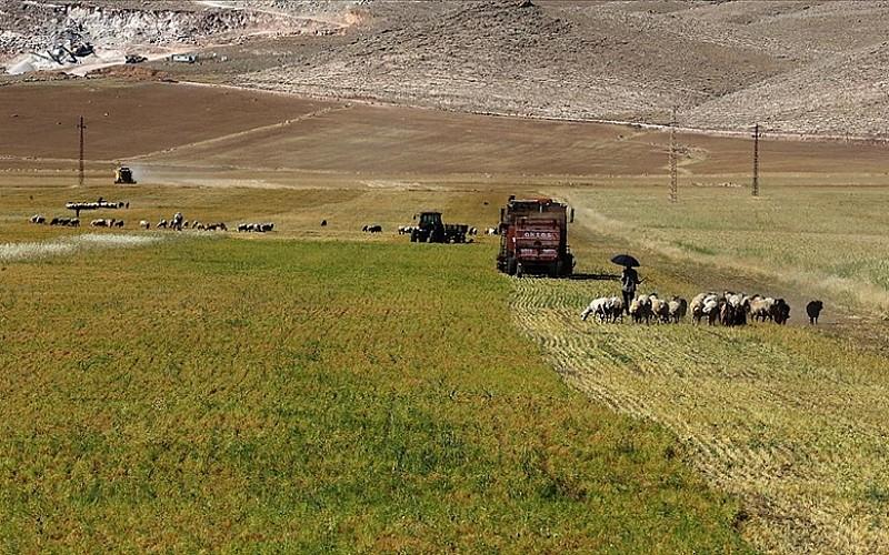 Mardin'in bereketli topraklarında tarımsal faaliyet bayramda da hız kesmedi