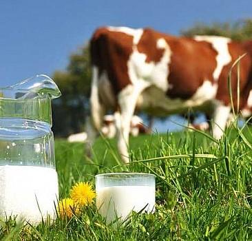 Toplanan inek sütü miktarı martta yıllık yüzde 1,7 artarak 894 bin tona yaklaştı