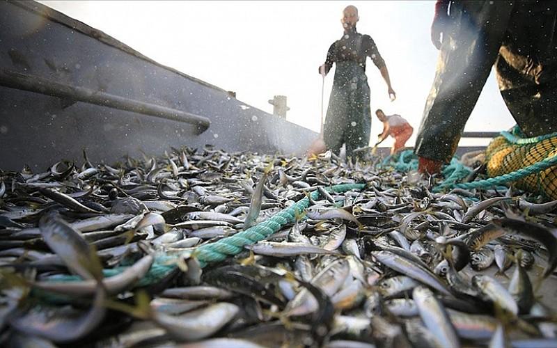 Balıkçılar ilk ağlarını bereketiyle çekti