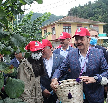 TMO Genel Müdürü Ahmet Güldal Trabzon'da fındık hasat şenliğine katıldı:
