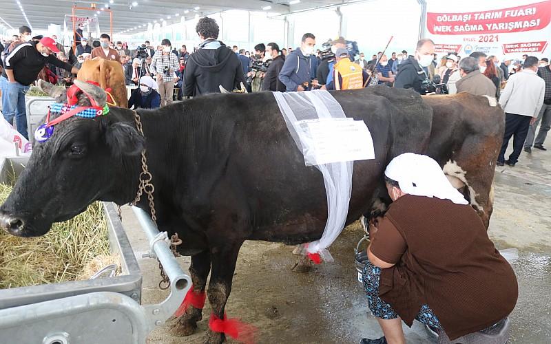 """AGROTEC 24. Uluslararası Tarım Fuarı'nda """"inek sağma yarışması"""" düzenlendi"""