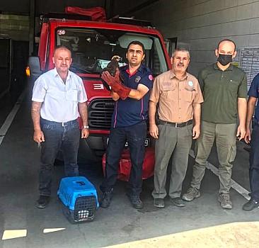 Kahramanmaraş'ta tedavisi tamamlanan kızıl şahin doğaya salındı