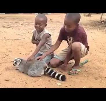 Bu hayvan masajı seviyor