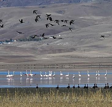 Kuş cenneti Erçek Gölü yaban kazlarıyla şenlendi